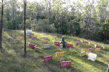 Paintball Bundaberg Field 5